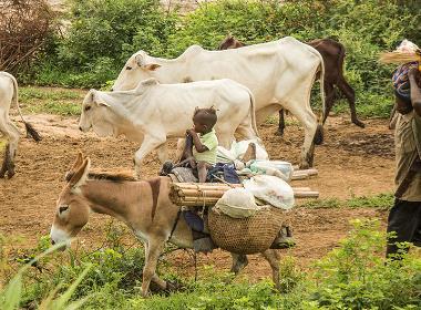 Fulani-herdar i centrala Nigeria. Personerna på bilden har ingen koppling till artikeln.